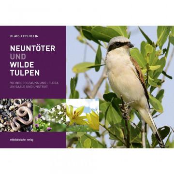 Neuntöter und Wilde Tulpen