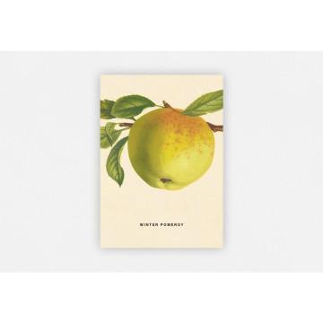 An Apple a Day 2020 - Postkartenset