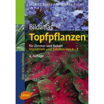 Bildatlas Topfpflanzen für Zimmer und Balkon